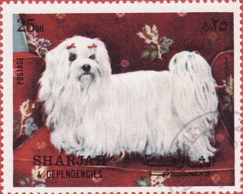 Stamp: Pomeranian (Canis lupus familiaris) (Sharjah) (Dogs) Mi:AE-SH 1025A