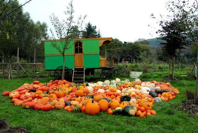 Les 70 meilleures images du tableau permaculture sur - La permaculture c est quoi ...