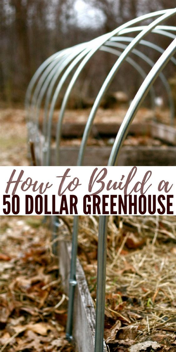 How to Build a 50 Dollar Greenhouse — See how to build this fantastic greenhouse for around 50 bucks or less if you can use your head!