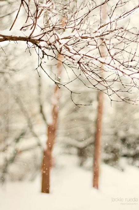 ❧ Winter Wonderland ❧