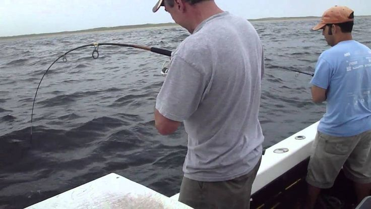 1000 images about ma recreational fishing on pinterest for Ma saltwater fishing license