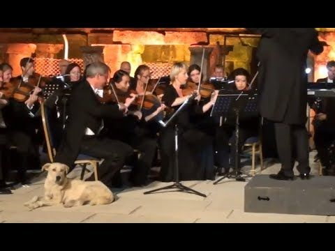 A Dog Walked Onstage During An Orchestra Concert And Made Itself Nice And Comfortable