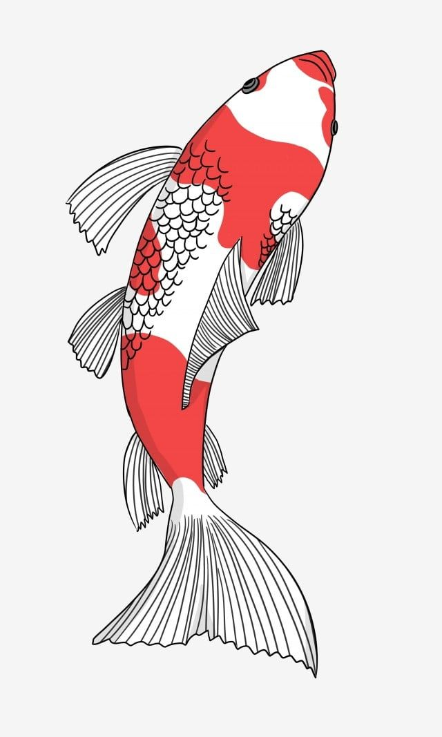 Red And White Koi Swimming Koi A Koi Hand Painted Koi Chinese Style White Red Png Transparent Clipart Image And Psd File For Free Download Koi Fish Drawing Fish Illustration Fish