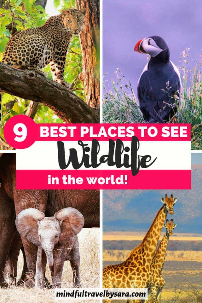 The World Around Me Travel Blogger S Posts 9 Best Wildlife Holidays In The World I Top Place Wildlife Vacations Wildlife Travel Animal Photography Wildlife