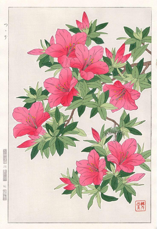 Азалия от Сёдо Kawarazaki весенний цветок японской гравюры