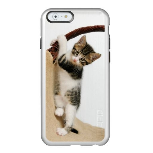Baby cat, #cute #kitten climbing incipio feather® shine #iPhone 6 case photograhed by Katho Menden