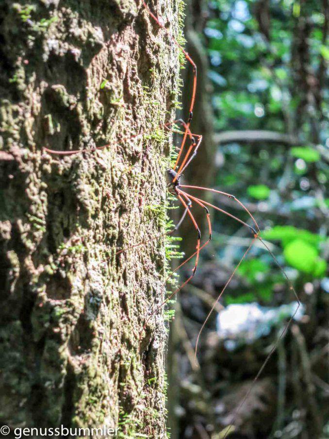 Der Cuc Phuong Nationalpark in Vietnam | www.genussbummler.de