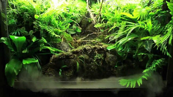 Waterfall paludarium hd 1080p paludarium vivarium for Waterfall fish tank