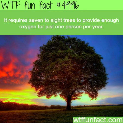 oxygen and trees This and that about trees  trees come in all sizes, shapes and colors there are two main  soak up carbon dioxide and exhale oxygen for us to breath.