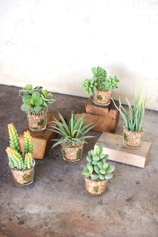 set of 6 artificial succulents in glass containers