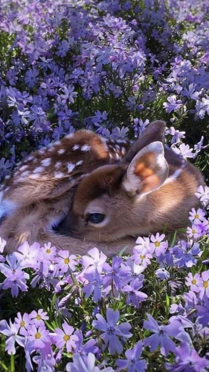 Cottagecore Aesthetic Lockscreens Reblog If You Cute Animals Animals Beautiful Deer