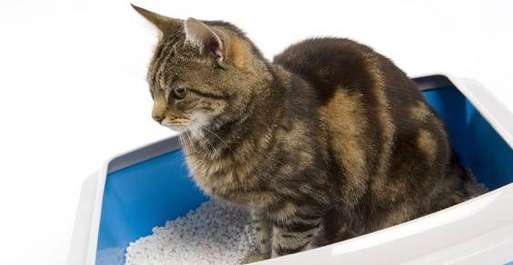 limpar e esterilizar a caixa de areia do gato                                                                                                                                                                                 Mais