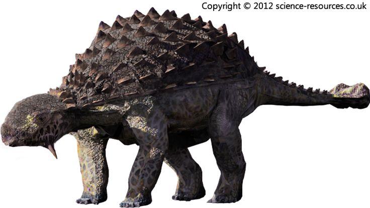 Ankylosaurus (Fused Lizard) Ankylosaurus was a large heavily armoured plant-eating dinosaur of the late Cretaceous.