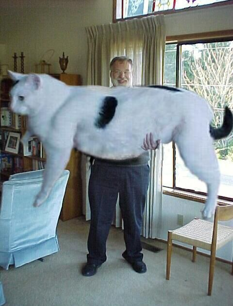 ... Biggest Cat In The World Guinness 2012