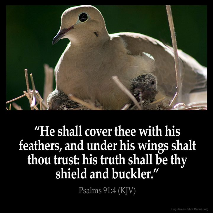 He shall cover thee with his feathers, and under his wings shalt thou trust: his truth shall be thy shield and buckler. – Psalms 91:4 (KJV) from King James Version Bible (KJV Bible)