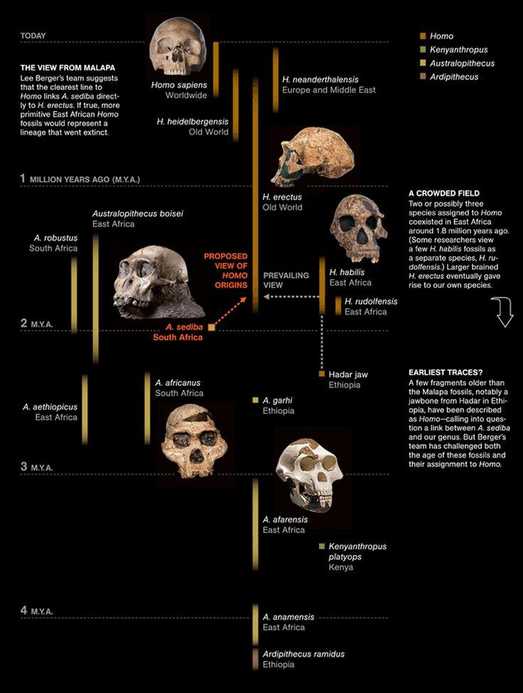 Anthropogenesis TIMELINE | .: A N C I E N T :. | Pinterest ...