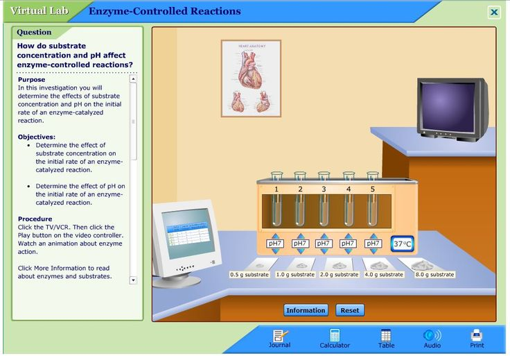 different concentrations of enzyme effect on reaction rate biology essay Essay on the effect of concentrations on rate of reaction  hcl at several different concentrations,  of the enzyme catalase essay the effect of.