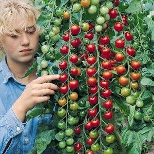 20 best images about gardening 2016 on pinterest for How to grow cherry tomatoes from seeds