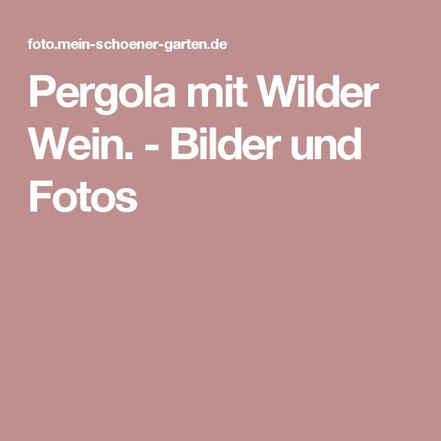 Pergola mit Wilder Wein. - Bilder und Fotos