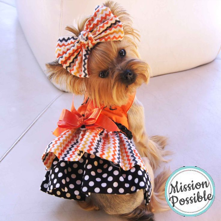 My Too Cute For Words Thanksgiving Dog Dress Gobble