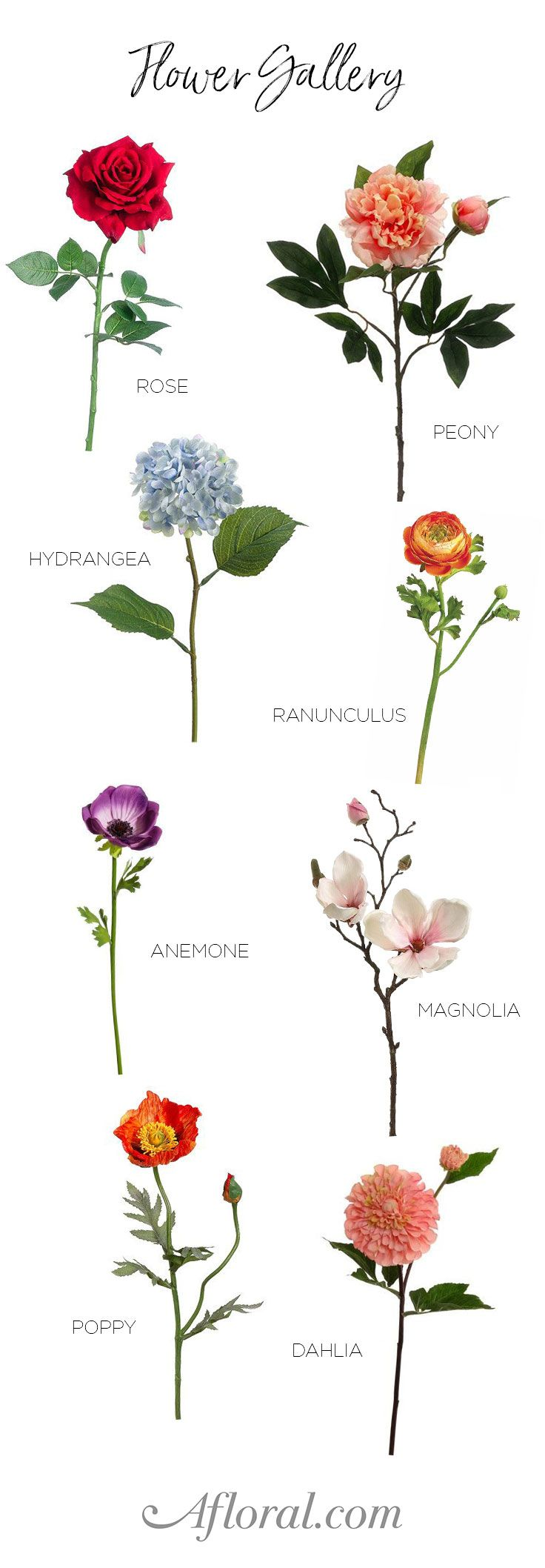 Kinds Flowering Plants