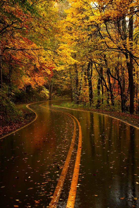 beautiful rain drenched, autumn road...i can almost smell it: Yellow Leaf, Nature, Leaf Road, Autumn, Beautiful, Fall, Places, Roads, North Carolina