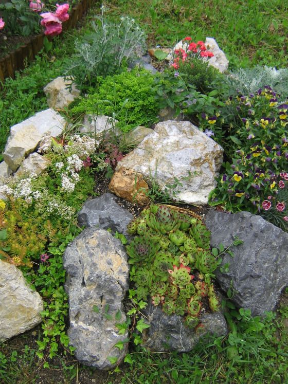 1000 images about ground cover ideas on pinterest Small rock garden