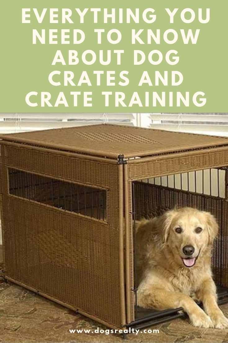 Answers To The Most Common Questions About Using A Crate To Train