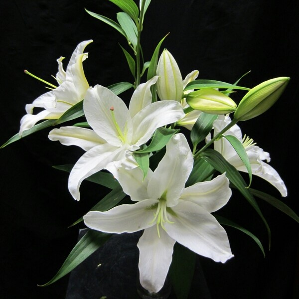 41 best flowers images on pinterest marriage reception wedding lillium casablanca flowers for march mightylinksfo Image collections