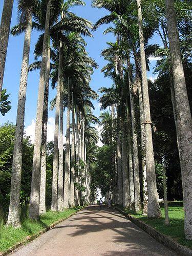 Aburi Botanical Garden, Accra, Ghana