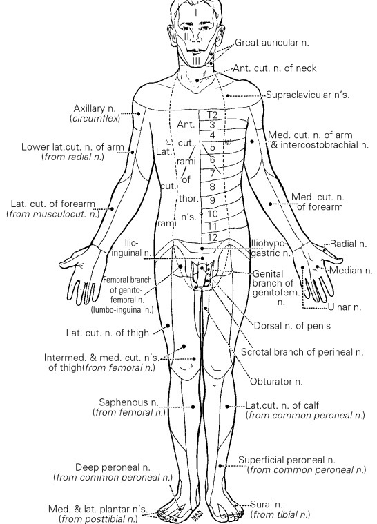 cutaneous fields of peripheral nerves