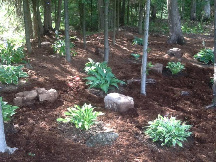 New hosta shade garden 2013