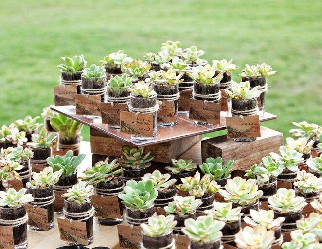 Wedding favors - mini succulents