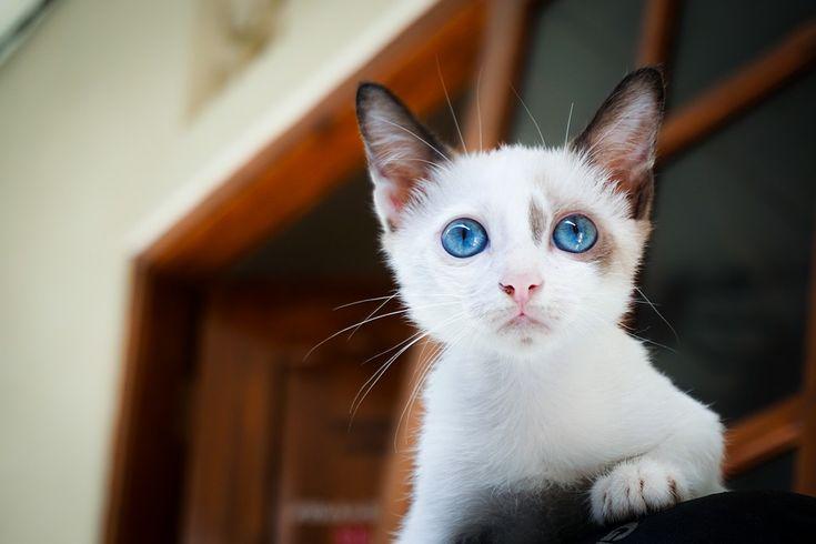 Blue Cat Katzenklo