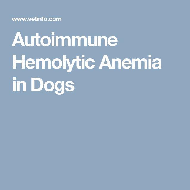 Autoimmune Hemolytic Anemia in Dogs