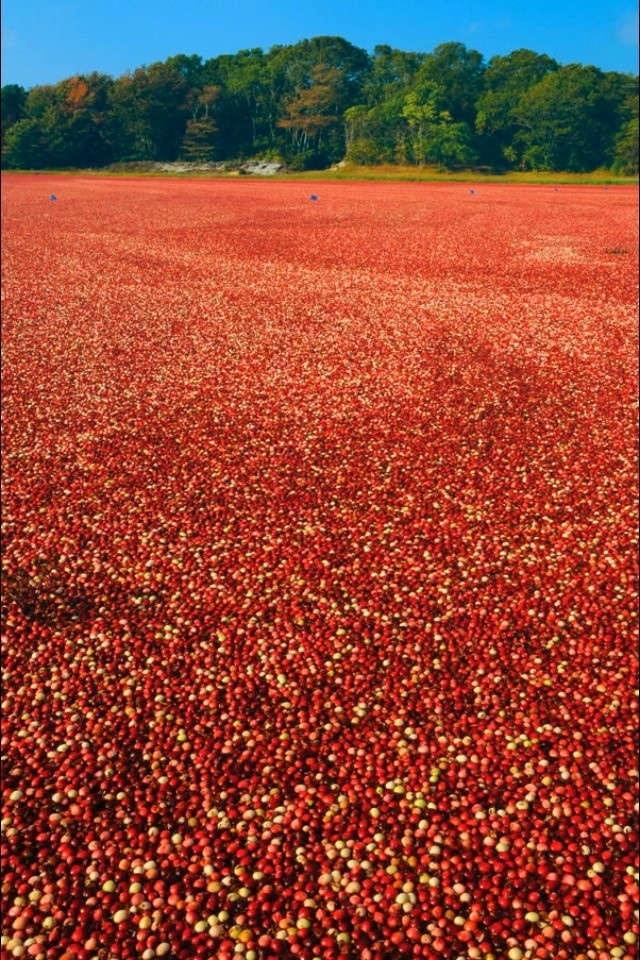 Cranberry Bog Tours - Guided Tours of a Working Cranberry Farm