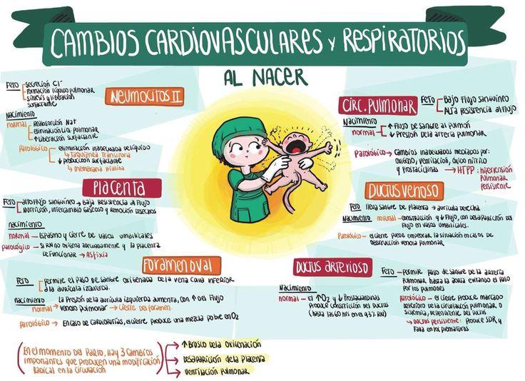 Cambios cardiosvasculares y respiratorios al nacer