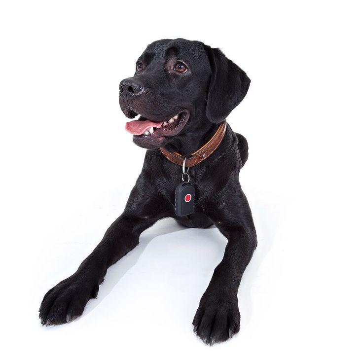 GPSSender für Hunde