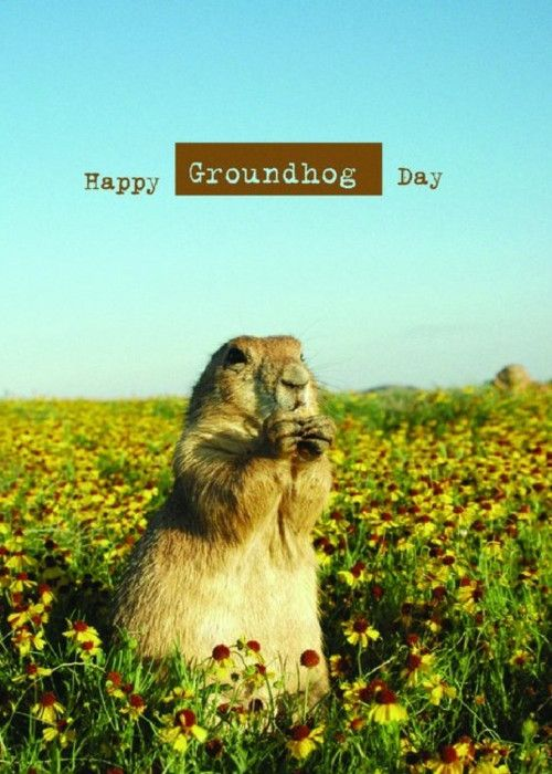 Want to send a card to someone for Groundhog Day.?  Click on one of the card and send a real card in the mail to your customers and friends. http://createcards.info or http://helenian.info  Skype: ian.kingwill  M: 61416163955  E: ian@helenian.ws