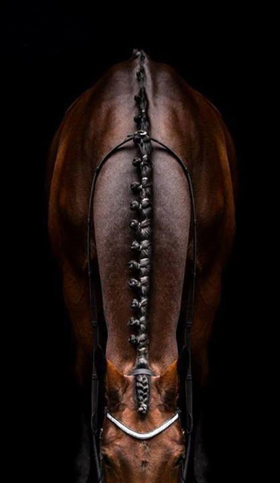 ♥ . . ✿⊱╮. ★ . . ╭✿⊰ ♥ . . ★ . . ♥ ☽★☀☆☾ #beautiful #horse
