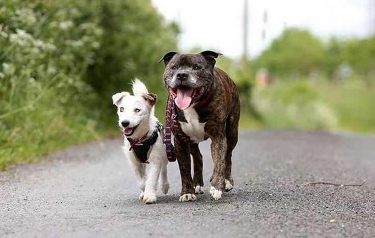 Due cani abbandonati e per la precisione, un Jack Russel di nome Glen ed un Bull Terrier di nome Buzz.  Dopo l'abbandono ed erano da sempre stati in grande sintonia, sino a quando un giorno, accade qualcosa che ha dell'incredibile. Glen, il Jack Russel Terrier a pelo lungo dalla faccia vispa e furba, perde velocemente ed inesorabile la vista. Buzz, il Bull Terrier, diventerà per Glen un vero e proprio cane guida per l'amico, aiutandolo a camminare e spostarsi anche senza vista.