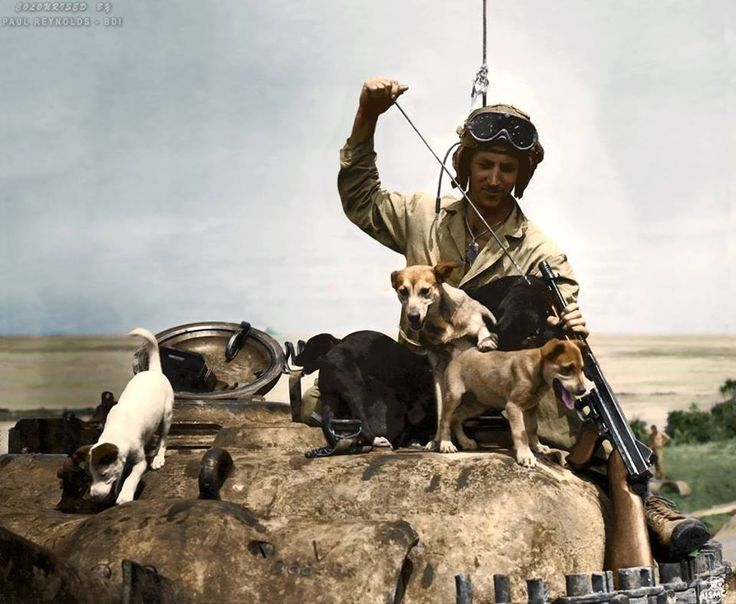 We are used to viewing the war in black and white. So when you get to see colourised images it brings the war to us…