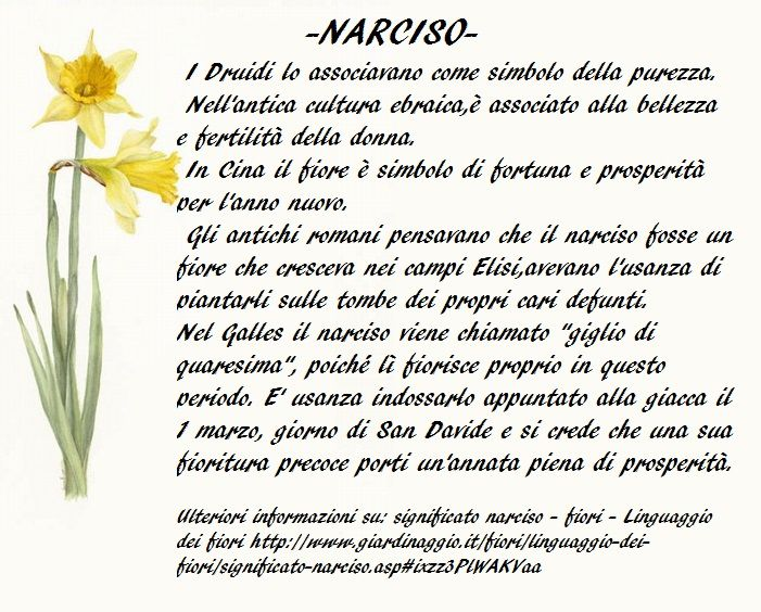 Simbolismo del Narciso