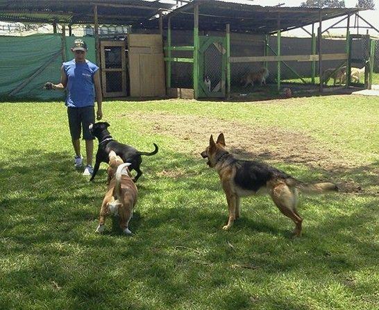 DOG STYLE Guardería, entrenamiento y peluquería para tu mascota.