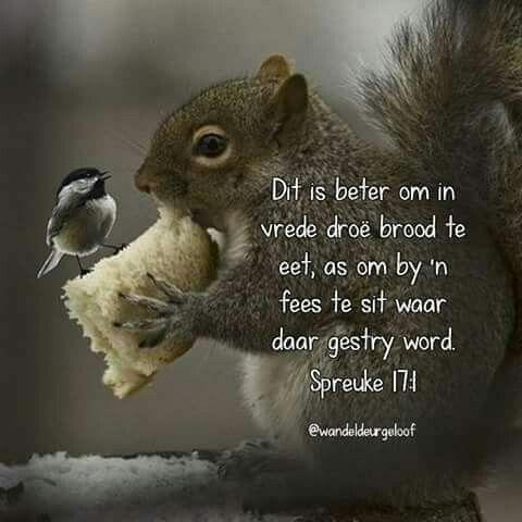 Spreuke 17:1