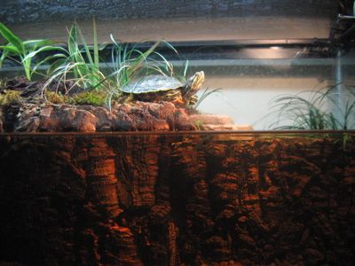 Plants For Turtle Tank : Planted turtle tank. turtles Pinterest