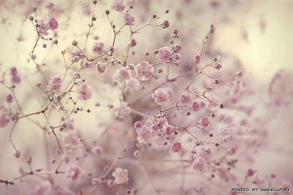 Картинки в розово серых тонах таких
