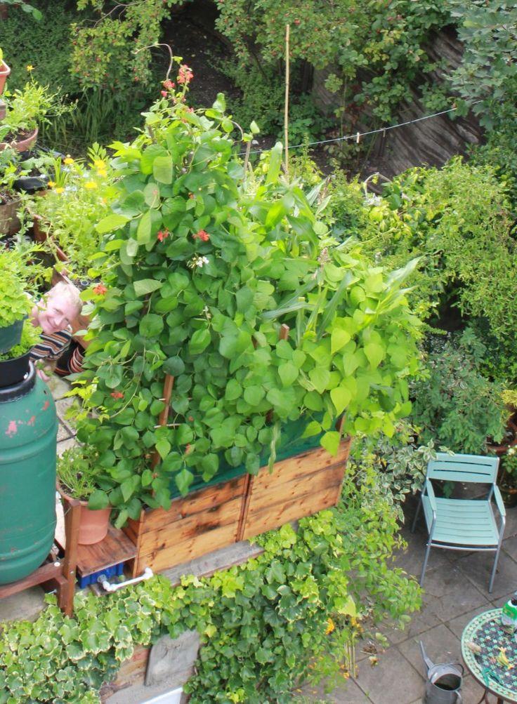 289 Best Apartment Deck U0026 Balcony Garden Images On Pinterest | Gardening,  Plants And Balcony