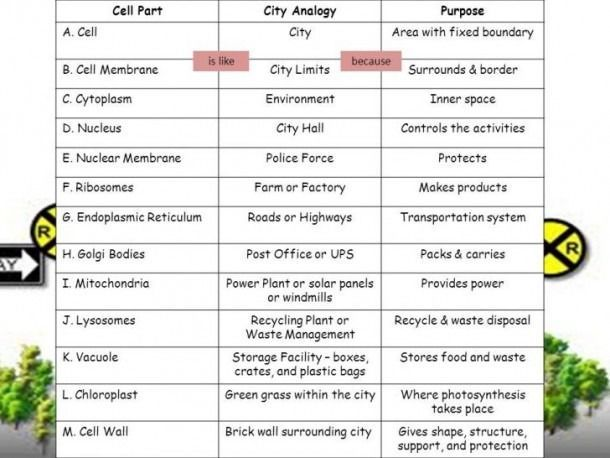 Cell City Analogy Worksheet Cell City Cell City Project Cell Parts
