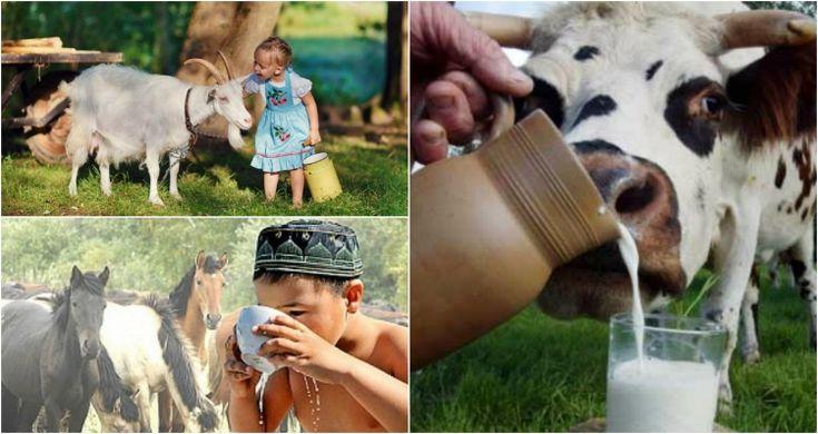 mliekoliek1
